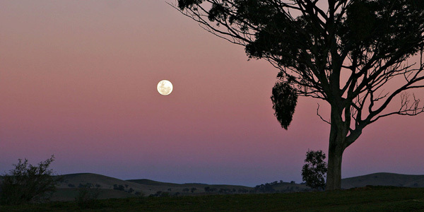 Pink sky and full moon image